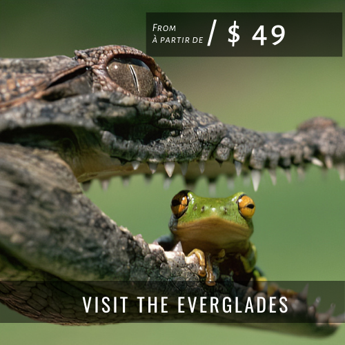Visites & Excursions EVERGLADES